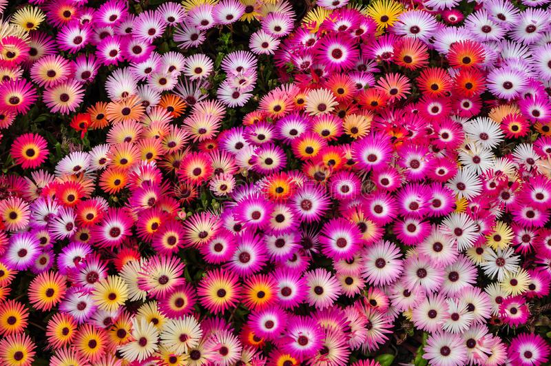 Parterre fleuri coloré image libre de droits