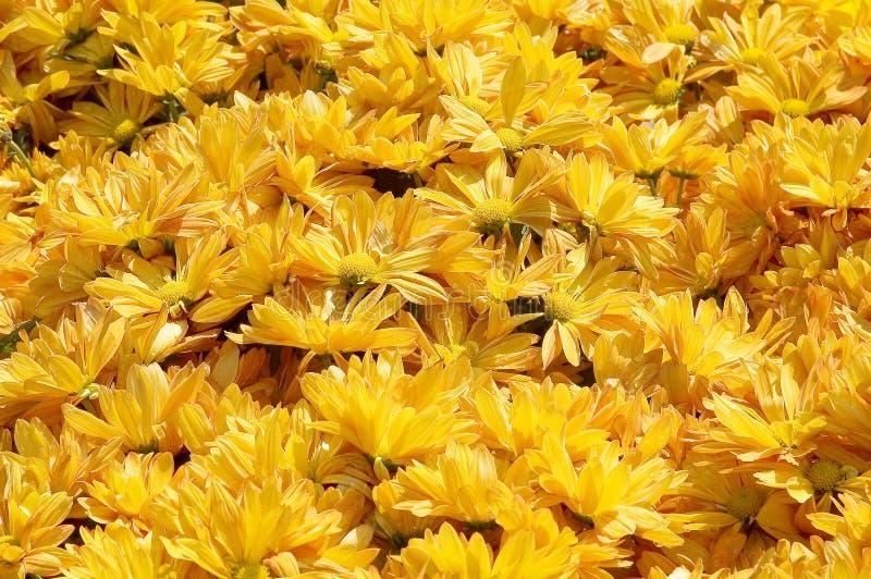 Download Parterre jaune photo stock. Image du fleur, pétales, jaune - 73490