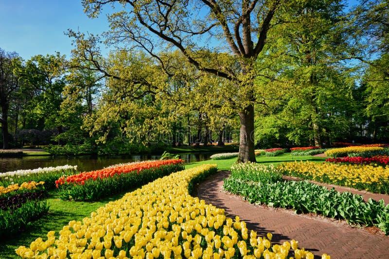 Parterres de floraison de tulipes dans le jardin d'agrément de Keukenhof, Netherlan photographie stock