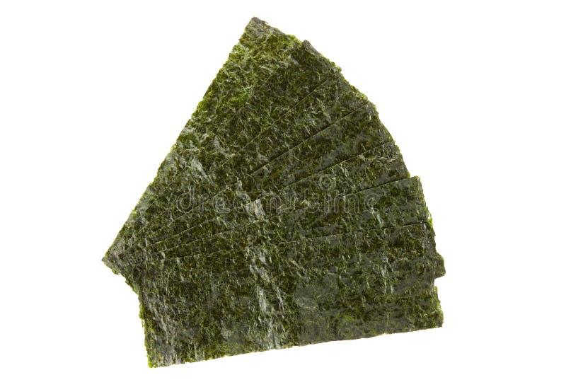 Partes de alga secada temperada fotografia de stock royalty free