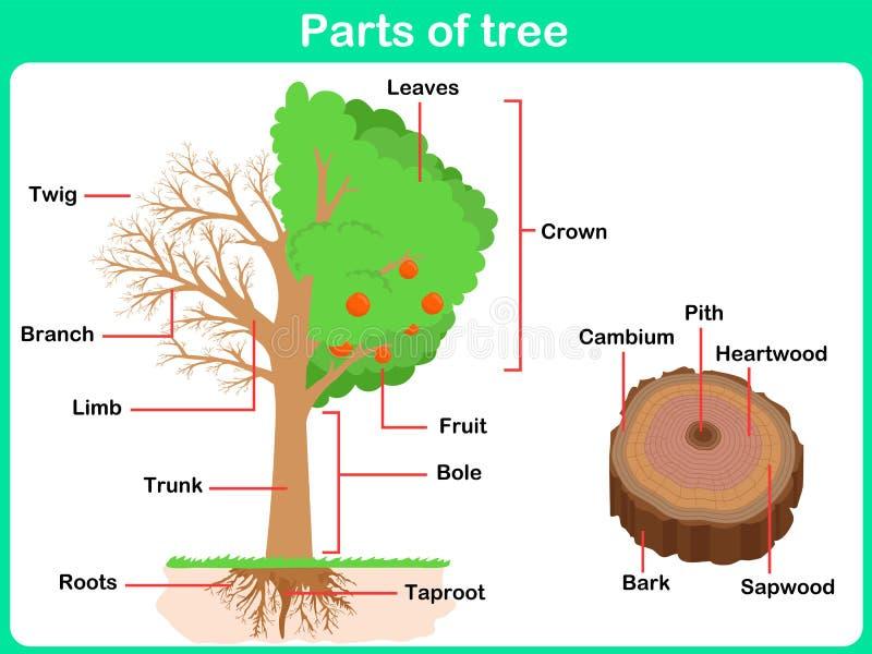 Partes de inclinação da árvore para crianças ilustração do vetor