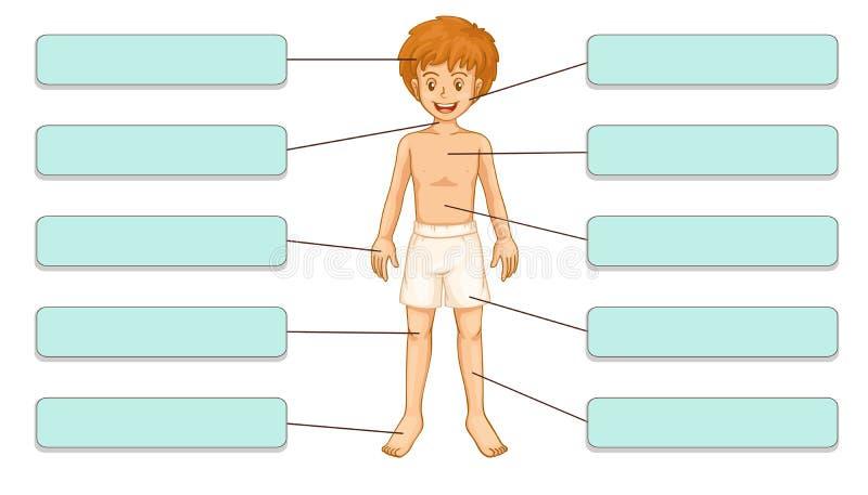 Partes del cuerpo ilustración del vector
