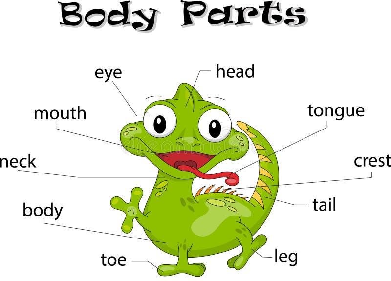 Partes del cuerpo de la iguana ilustración del vector