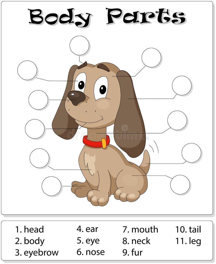 Partes del cuerpo del perro stock de ilustración