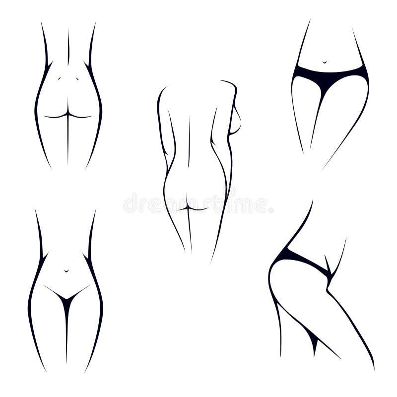 Partes Del Cuerpo Femeninas Delgadas, íntimas, Torso, Cintura ...
