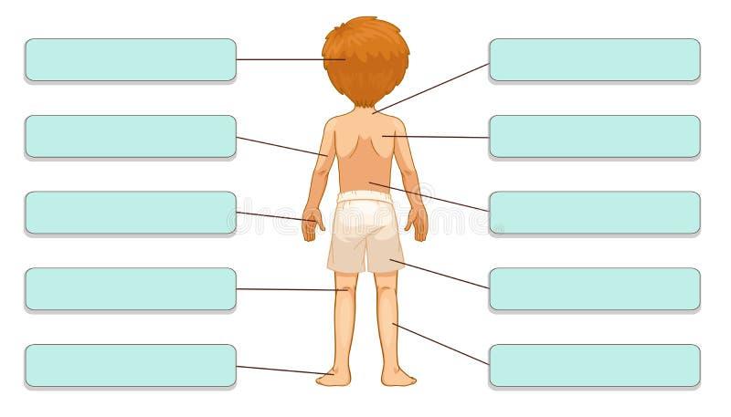 Partes do corpo ilustração royalty free