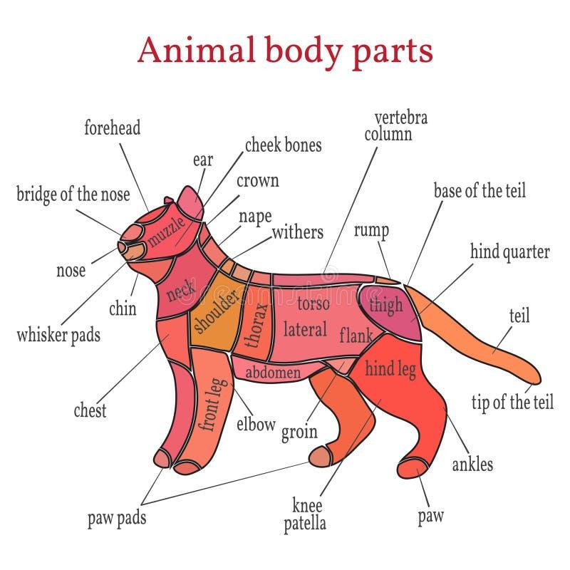 Partes do corpo animais ilustração do vetor