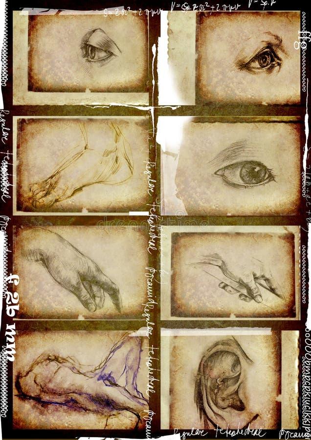 Partes do corpo humanas ilustração stock