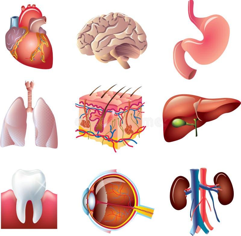 Partes do corpo humanas ajustadas ilustração stock