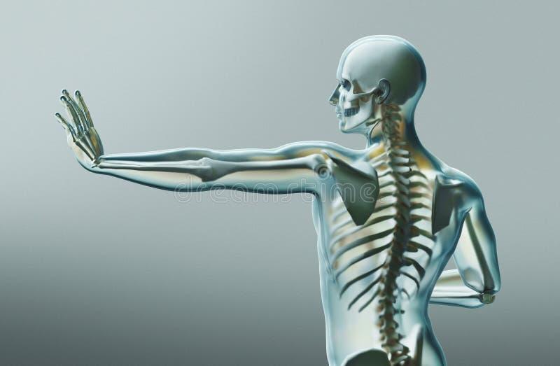 Partes do corpo humanas, raio de x, rendição 3d ilustração do vetor