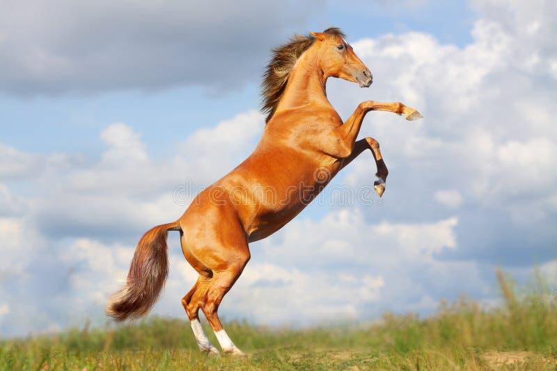 Partes posteriores del caballo fotos de archivo