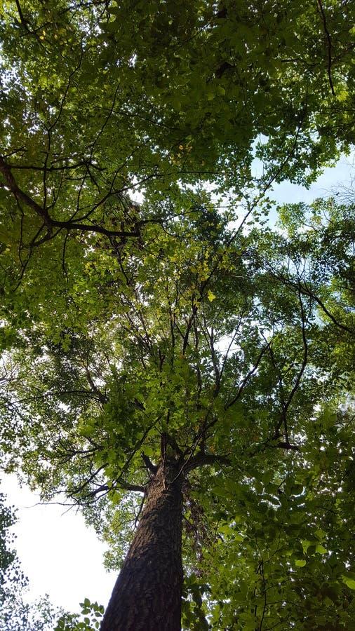 Partes superiores da árvore fotografia de stock