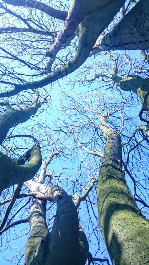 Partes superiores da árvore contra céus azuis fotografia de stock