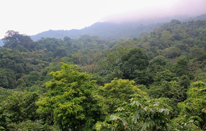 Partes superiores da árvore da selva fotografia de stock
