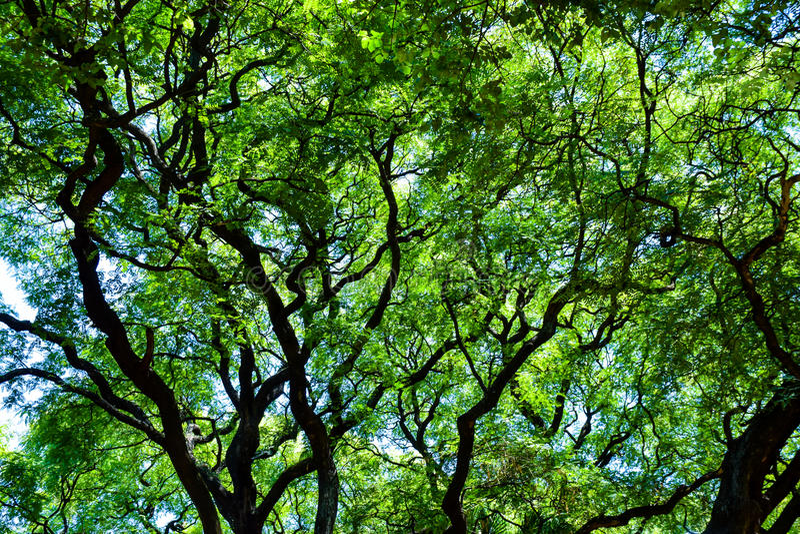 Partes superiores da árvore em Buenos Aires imagens de stock royalty free