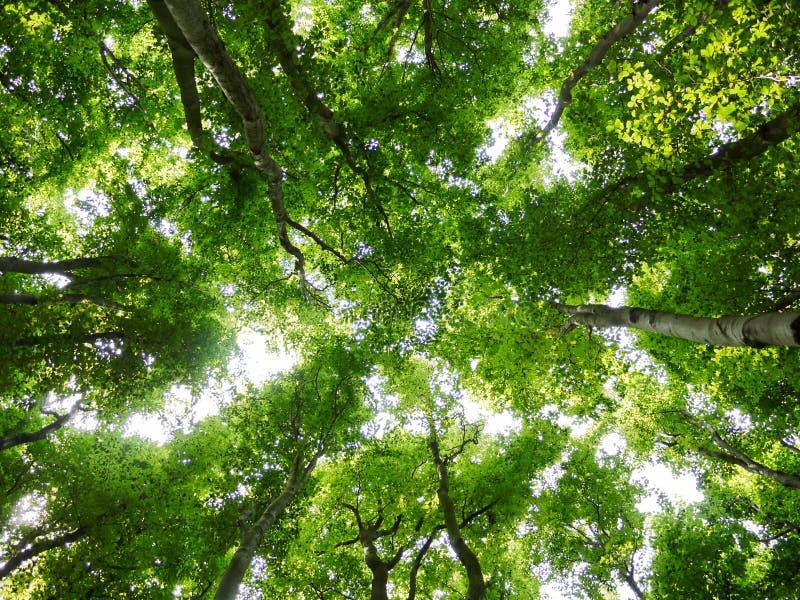 Partes superiores da árvore na floresta fotografia de stock royalty free