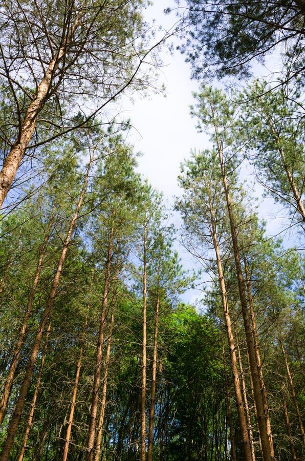 Partes superiores da árvore no céu fotografia de stock royalty free