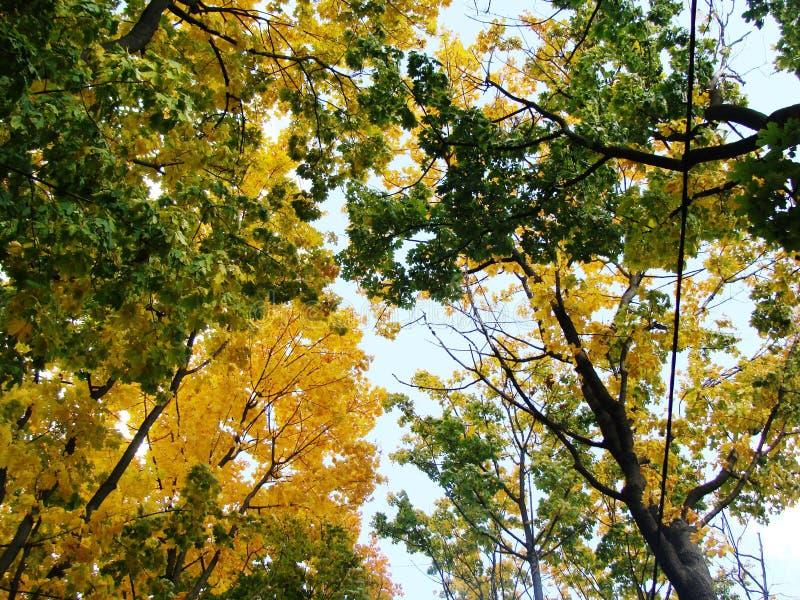 Partes superiores das árvores fotos de stock royalty free