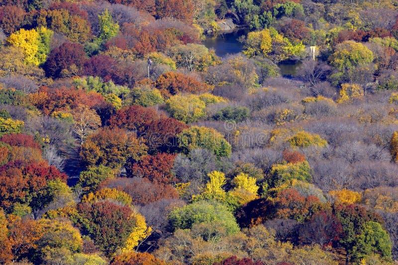 Partes superiores das árvores imagens de stock