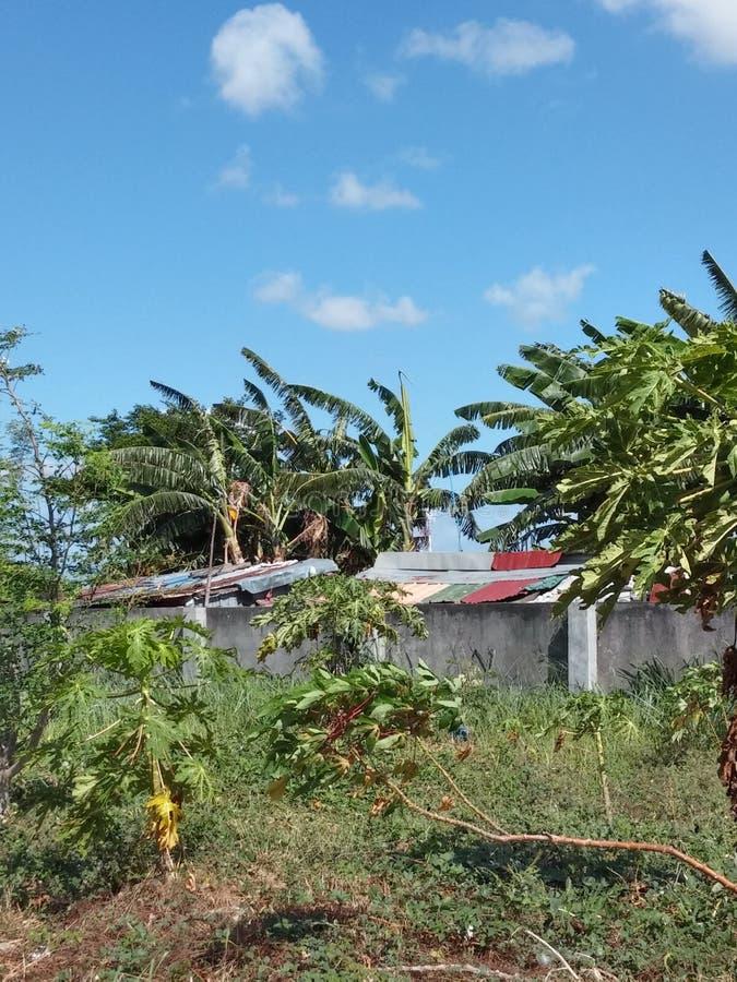 Partes superiores do telhado na selva foto de stock