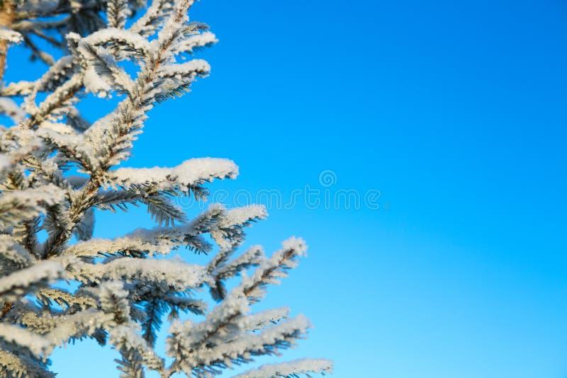 Partes superiores e coroas dos abeto cobertos com a neve contra o céu azul fotos de stock royalty free