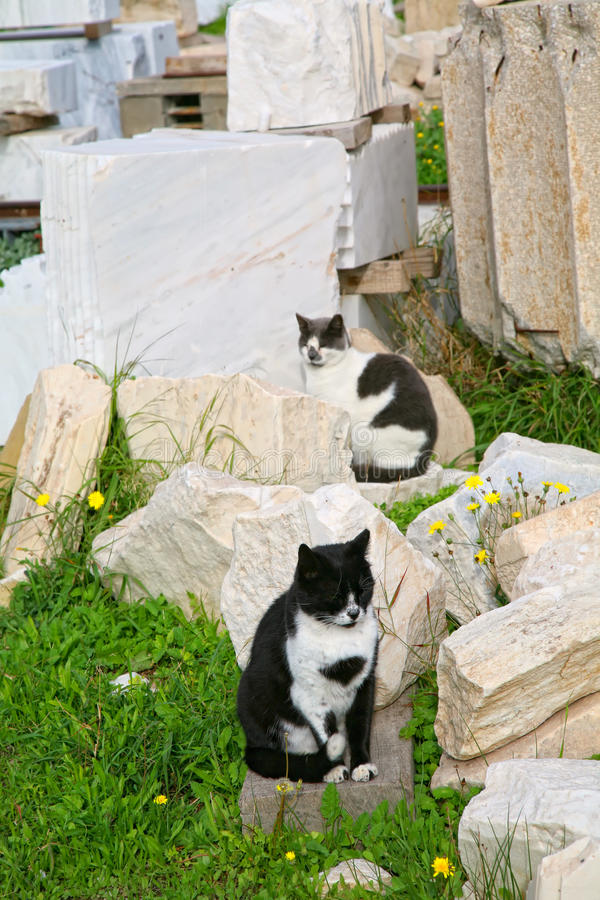 Parthenon Cats Royalty Free Stock Image