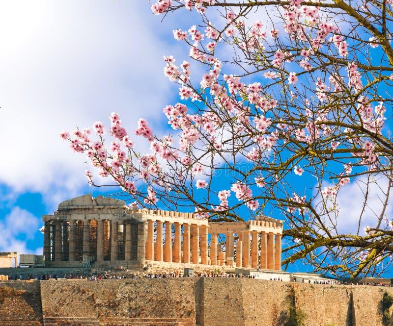 Parthenon spring season almond`s flrowers Acropolis in Athens royalty free stock image