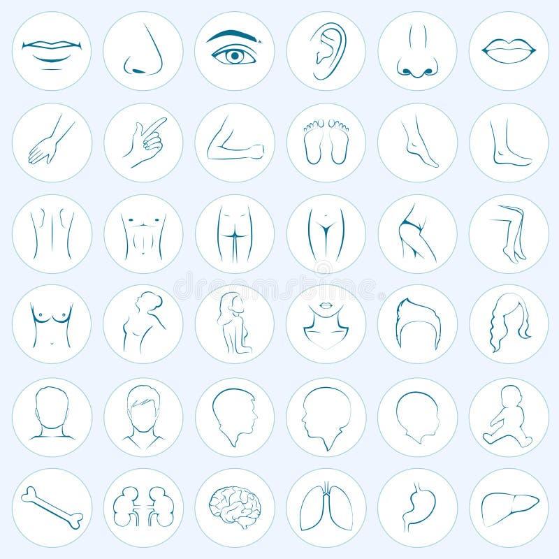 Parti del corpo, cinque sensi illustrazione vettoriale