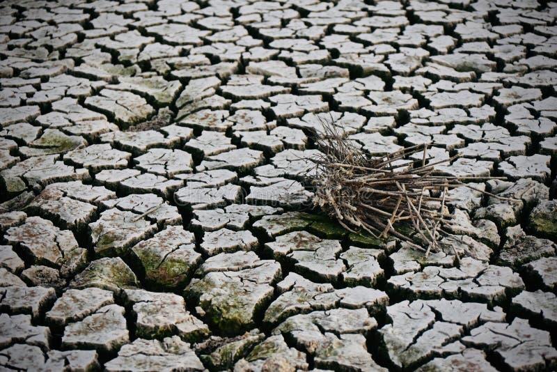 Parti secche dell'albero isolate su una foto incrinata del fondo del suolo immagini stock libere da diritti