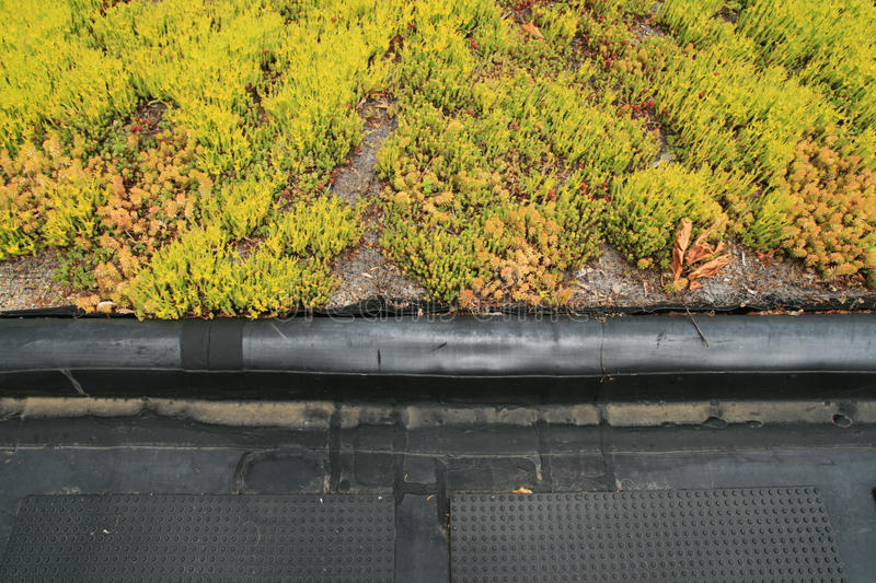 Partial green roof detail. Partial green roof top detail showing the boundary royalty free stock image