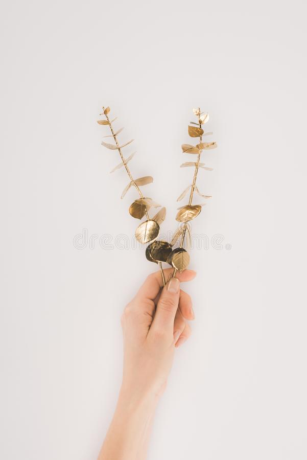 partial view of female hand holding plants with golden leaves stock photo