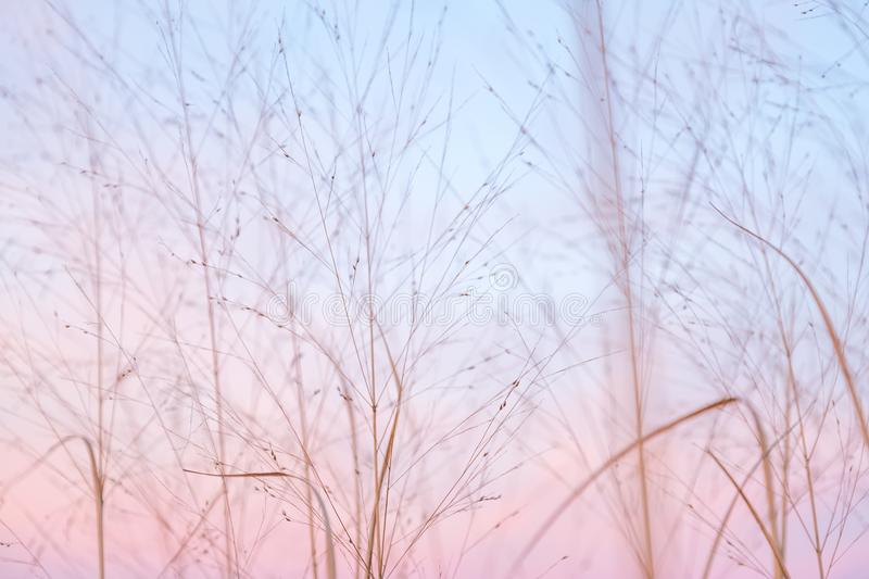 Partially Cloudy Pastel Pink and Purple Dusk Light with Blue Sky. Over Wild Grasses stock photos