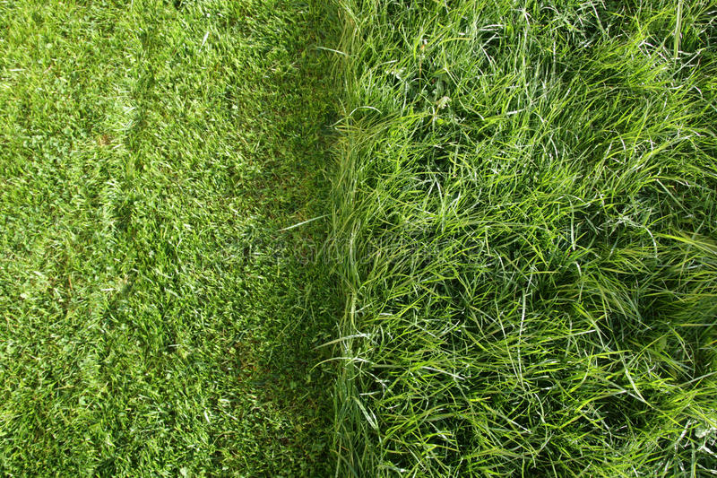 Partially cut grass lawn. Part of lawn has been cut and other part was not cut stock images