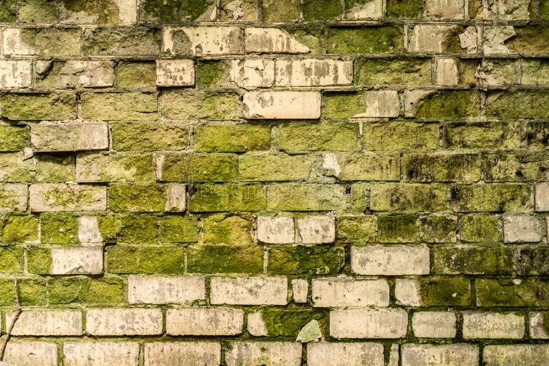 Partially destroyed wall of white brick and covered with green mold, a shadow from the trees on the old wall, retro architecture stock photo