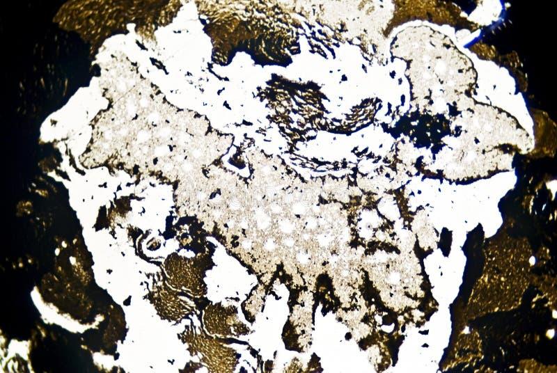 Particelle di fuliggine microscopiche fotografia stock