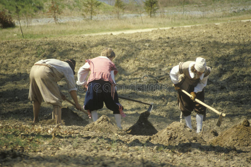 Participants working in garden. In historic Jamestown, Virginia, site of the first English Colony royalty free stock images