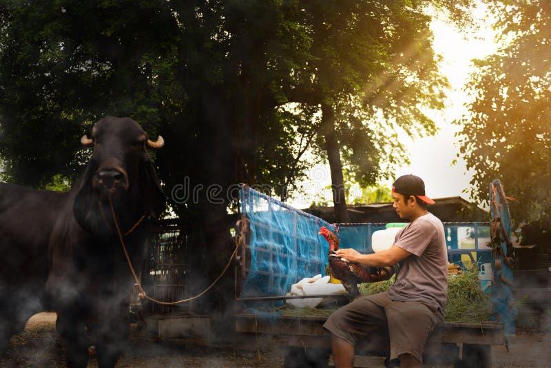Participation thaïlandaise d'agriculteur et nettoyage d'un poulet, mode de vie sain des personnes dans asiatique images libres de droits