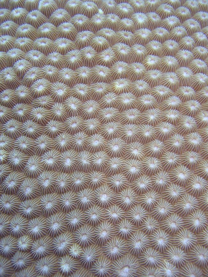 Particolare - corallo duro immagini stock