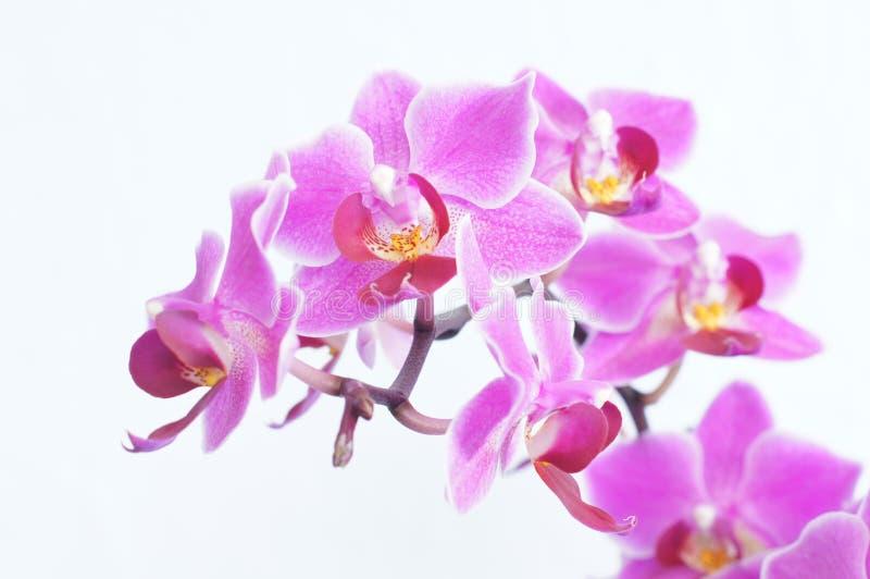 Particolare dei fiori viola fotografia stock