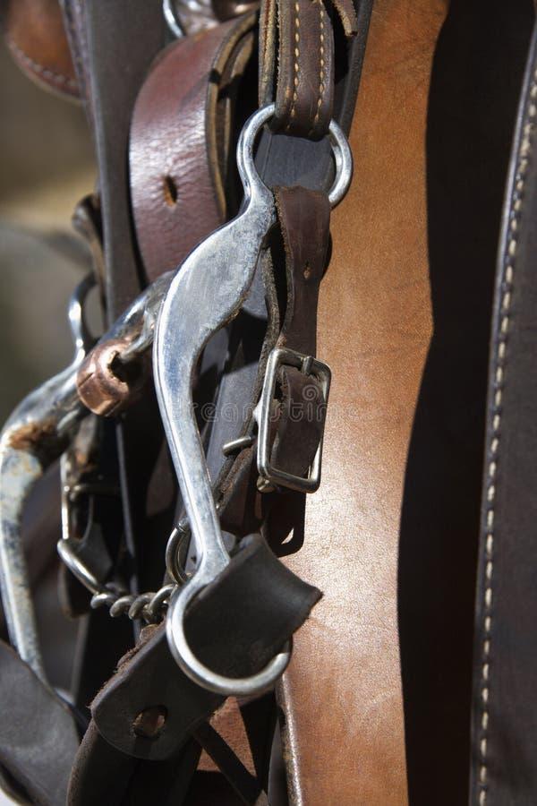 Particolare del freno del cavallo immagini stock libere da diritti