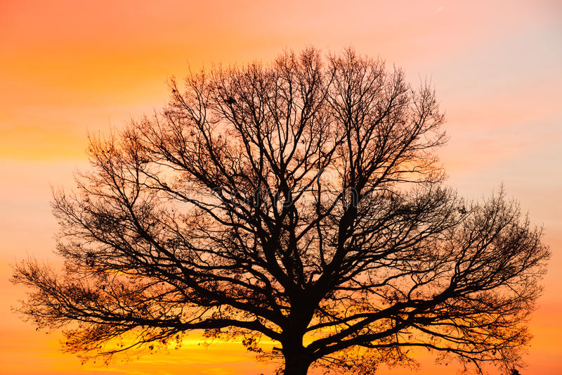 Particolare dell'albero di memoria fotografia stock libera da diritti