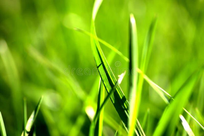 Particolare dell'erba fotografie stock