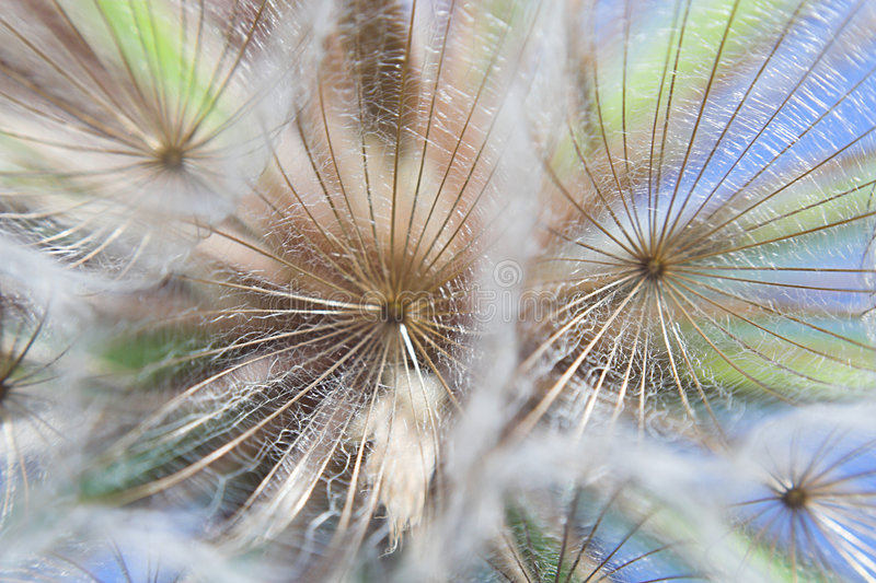 Particolare della pianta. immagini stock libere da diritti