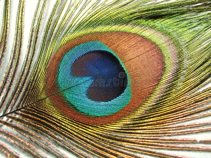 Particolare della piuma del pavone fotografia stock - Immagini pavone a colori ...