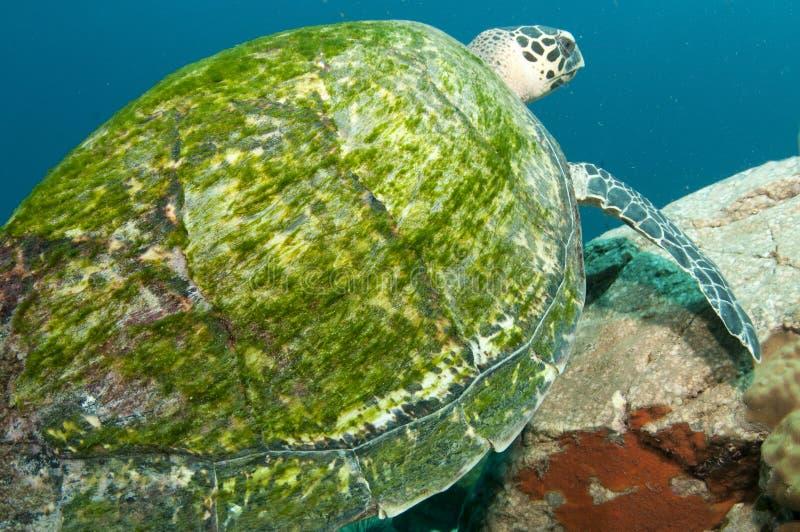 Particolare delle coperture della tartaruga immagini stock libere da diritti
