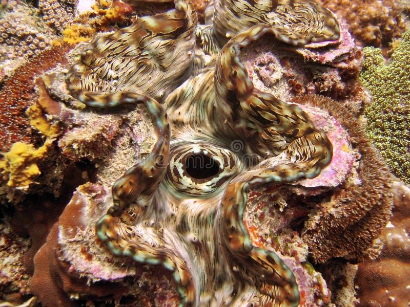 Particolare - mollusco gigante immagini stock