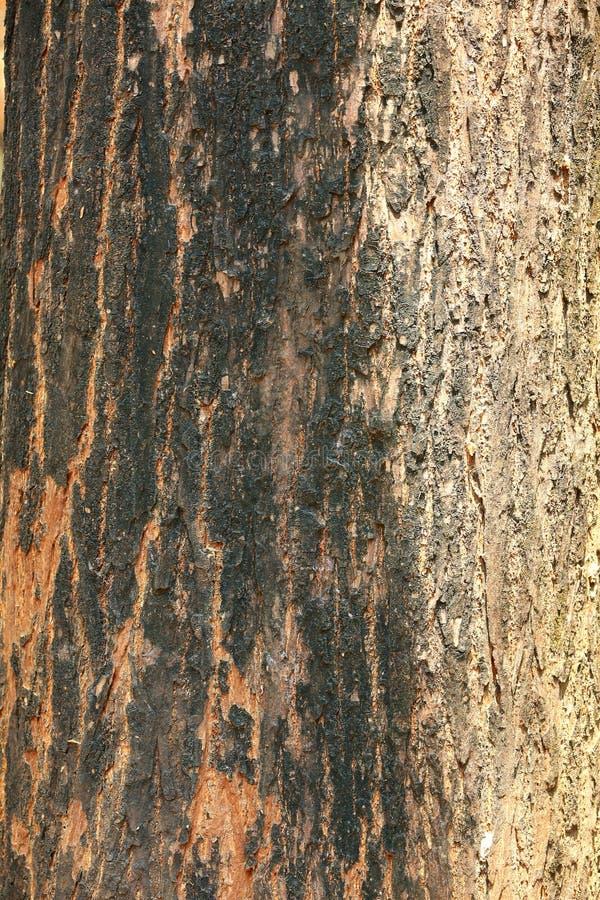Particolare nell'albero fotografie stock