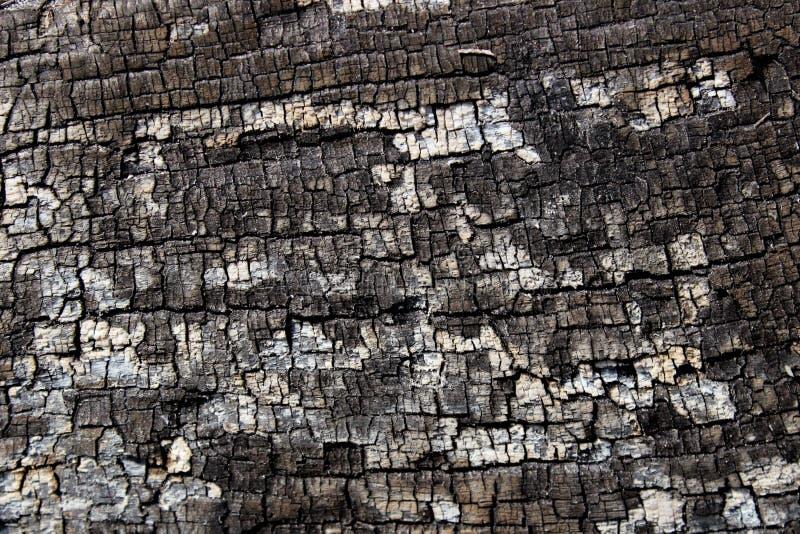 Particolare nell'albero Priorit? bassa dell'albero Struttura dell'albero della crepa immagine stock libera da diritti