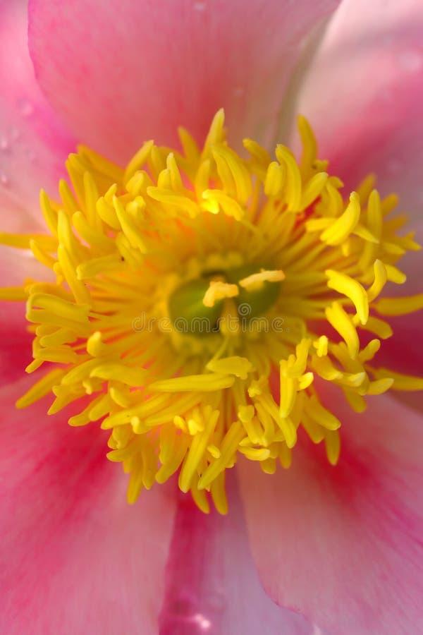 Particolari del fiore immagini stock