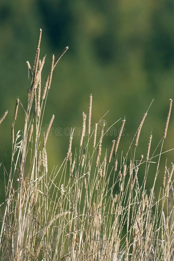 Download Particular stalk stock photo. Image of nature, colour - 4218638